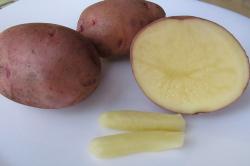 Свечи из картофеля при геморрое