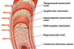 Строение прямой кишки