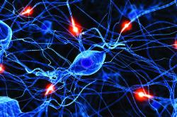 Нарушение нервной системы при раке поджелудочной железы